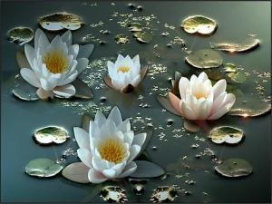 Sống chậm lại để cảm nhận được mọi vẻ đẹp cuộc sống xung quanh ta. Nguồn: vietbao.com